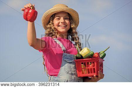 Crops Harvest. Harvest Season. Child Carry Harvest Sky Background. Organic Food. Sunny Day At Farm.
