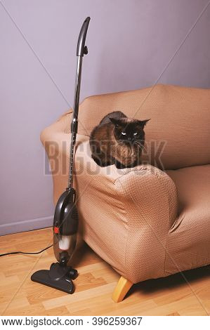 Upright Bagless Vacuum Cleaner Standing Next To Cat On Sofa In Domestic Living Room