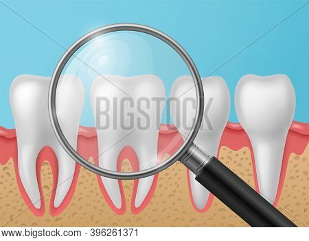 Healthy Teeth With Magnifying Glass. Realistic White Shining Human Tooth With Roots In Gums, Enamel