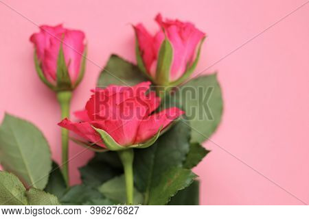 Pink Roses On A Light Pink Background.floral Delicate Background With Roses. Blank Floral Card.copy