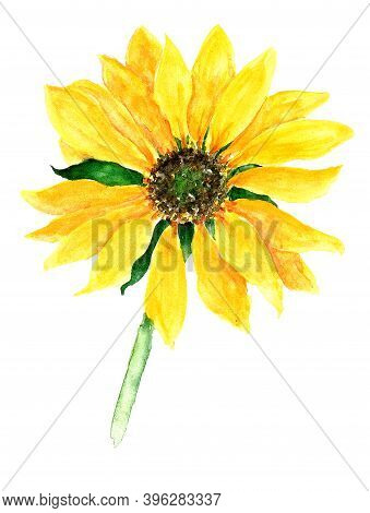 Watercolor Vertical Illustration Of A Bright Yellow Sunflower Flower With A Small Green Brown Center