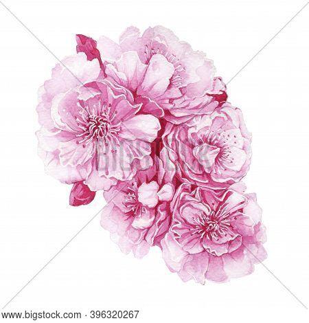 Sakura Blossoms Watercolor  Illustration. Hand Drawn Pink Cherry Tree Full Blooming With Buds. Sakur