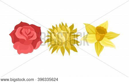 Tender Flora With Rose Bud And Narcissus Flower Vector Set