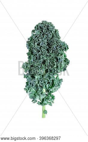 Curly Kale Leaf Isolated On White. Superfood