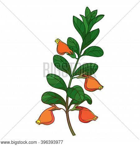 Vector Bunch Of Outline Nematanthus Or Goldfish Plant With Orange Flower And Green Leaf Isolated On