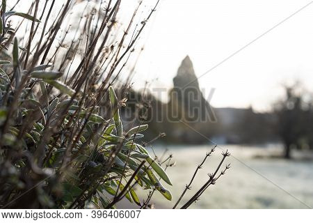 Frozen Stem Of Dry Lavender With Rime In Foreground Of A Field In The Morning Sun. Rural Scene In Ba
