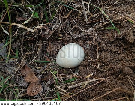 High Angle Shot Of A Small White Egg In The Soil In Jungle With Selective Focus, Selective Focus On