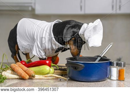 Funny Dachshund Dog In Costume Of Chief With White Cap Is Going To Cook Vegetarian Dish With Vegetab