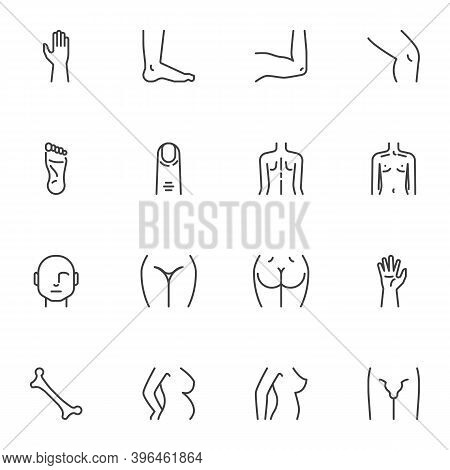 Body Parts Line Icons Set, Outline Vector Symbol Collection, Linear Style Pictogram Pack. Signs, Log