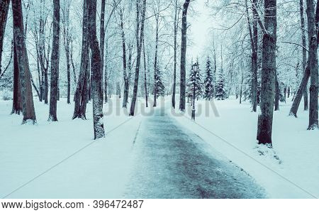 Winter landscape, deserted winter alley covered with snow, winter park trees along the walkway. Winter city landscape, winter snowy alley, winter street covered with snow