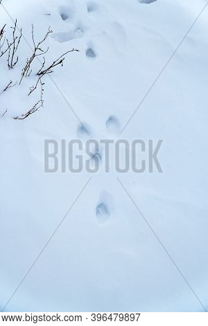 The Track Of A Hare In The Snow