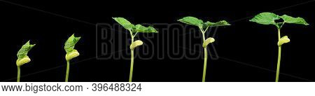 Shoots of a young green plant in stages within 5 days Time lapse High quality photo