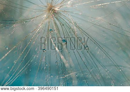 Close-up Macro Image Of A Dandelion Seed Showing Beautiful Delicate Lace Patterns Of The Plant With