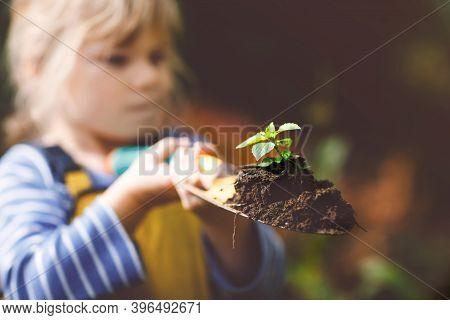 Adorable Little Toddler Girl Holding Garden Shovel With Green Plants Seedling In Hands. Cute Child L