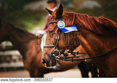 A Beautiful Sorrel Horse With A Soft Mane And A Bridle With A Prize Blue Rosette On Its Muzzle Won T