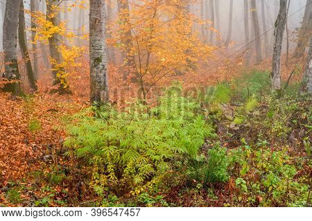 Fantasy Foggy Forest Trees In The Autumn Mountains
