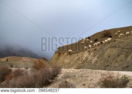 A Flock Of Sheeps Grazes In The Autumn Mountains