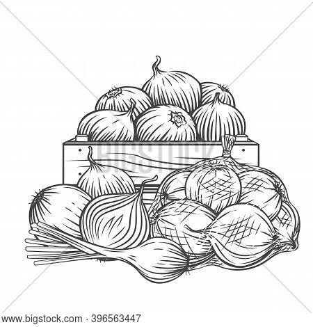 Onion, Leek Outline Hand Drawn Monochrome Vector Illustration In Retro Sketch Style For Ad Farm Prod