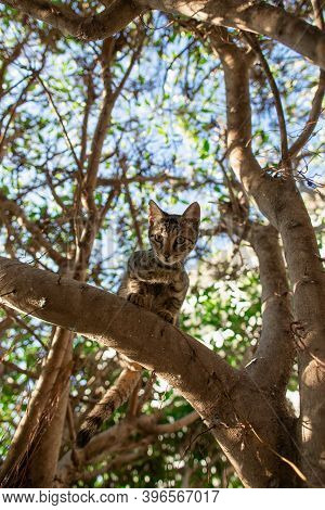 Small Cute Kitten Climbing Tree And Looking To Camera