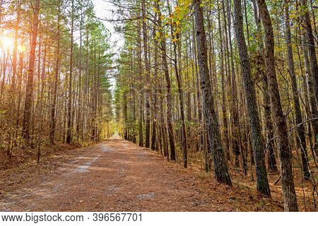 Deserted forest path with focus on mid foreground