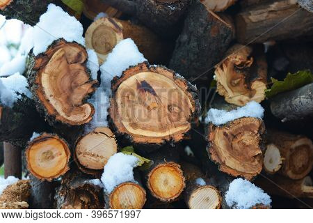 Beautiful Boughs, Branches, Firewood, Wood From Natural Wood For Kindling A Fireplace And Lie Under