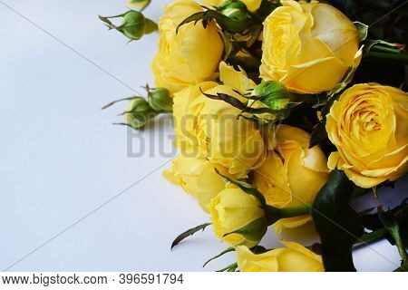 Beautiful Yellow Pion-shaped Rose. Bouquet Shrub Roses.copy Space