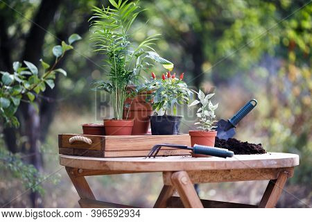 Planting Flowers  In The Garden. Flower Pots And Plants For Transplanting. Lifestyle