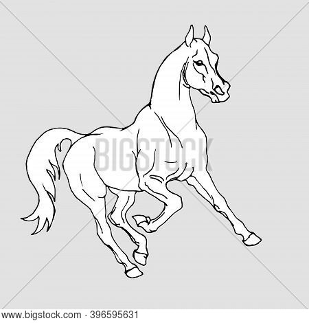 Hand Drawn, Prancing White Horse  Isolated On Green Background