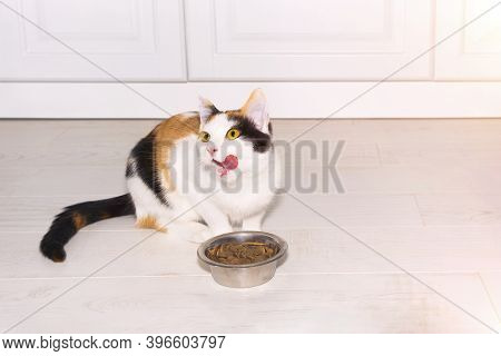 Cute Short-haired Tricolor Kitten Eating Dry Food In The Light Kitchen. Pet Breeding In Home. Cat Li