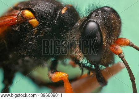 Extreme close up shot of dead hornet on green background