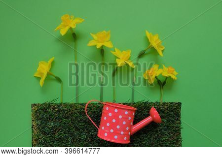 Yellow Daffodils. Spring Flowers. Watering And Care Of Flowers. Yellow Daffodils Flowers, Artificial