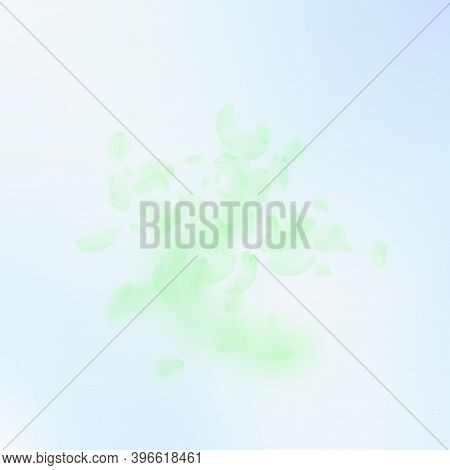 Green Flower Petals Falling Down. Radiant Romantic Flowers Explosion. Flying Petal On Blue Sky Squar
