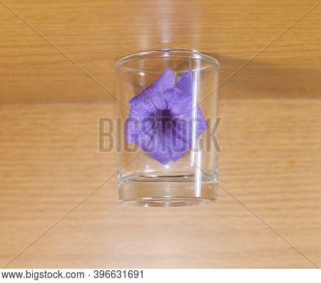 Beautiful Purple Ruellia In Small Glass, Background Brown