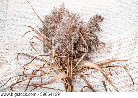 Dried Flowers Bouquet On White Knitted Woolen Shawl Scarf Background. Dry Reeds, River Cane And Spik