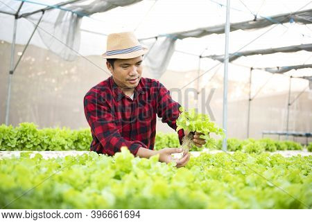 Asian Farmers Harvest Farm Produce And Fresh Vegetables In Greenhouses Or Organic Farms For Their Su