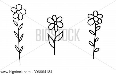 Doodle Illustration Of Flower. Spring Season. Hand Drawn Simple Element. St Vaentines Or Mothers Day