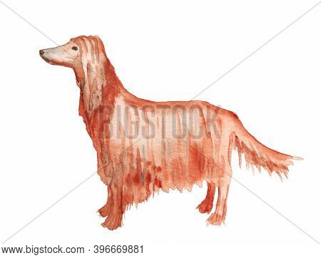 Watercolor Image Of Afghan Hound Dog Isolated On White Background. Hand Drawn Catroon Illustration
