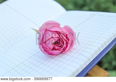 An Open Empty Notepad, A Book With Empty Pages, A Pink Rose On Top. Romantic And Gentle Concept, Cop