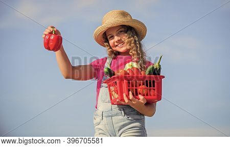 Child Carry Harvest Sky Background. Organic Food. Sunny Day At Farm. Natural Vitamin Nutrition. Crop