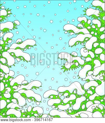 Snow-covered Prickly Green Fir Branches In A White Winter Forest On A Snowy And Frosty Beautiful Day