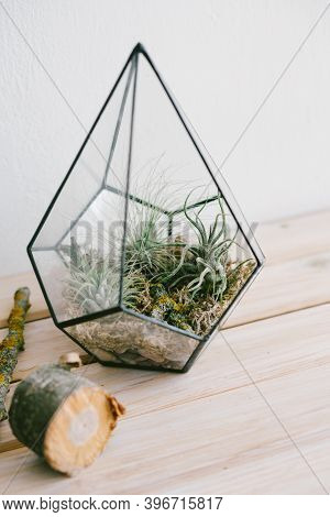 Tillandsia In A Glass Florarium. Decor In The Office, Hotel Or Home. Beautiful Tropical Plants In Th