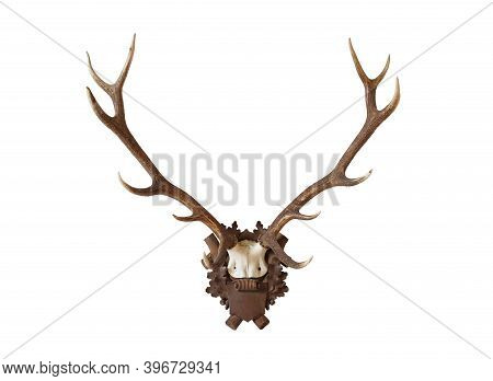 Antlers From A Huge Stag Mounted On Wood Board, Isolated On White Background