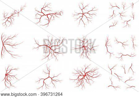 Vein Set Illustration Isolated On White Background. Collection Of Human Blood System Graphic. Red Ve