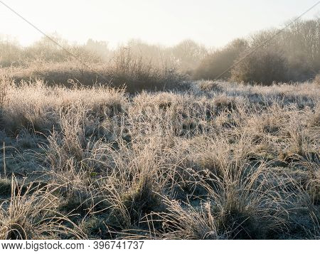 Surrey Heathland With Frost During The Morning Golden Hour.