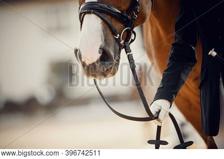 Nose Sports Horse In The Bridle. Portrait Stallion  In The Bridle. Horse Muzzle Close Up. Dressage H
