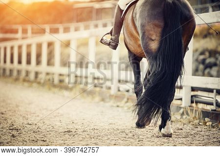 Equestrian Sport.the Leg Of The Rider In The Stirrup, Riding On A Brown Horse. Dressage Of Horse In