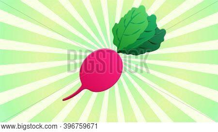 Radish On A Retro Background, Vector Illustration. Pink Radish, Natural Product. Farm Vegetables Fro