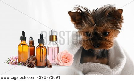 Aromatherapy For Animals. Essential Oils And Cute Yorkshire Terrier On Background