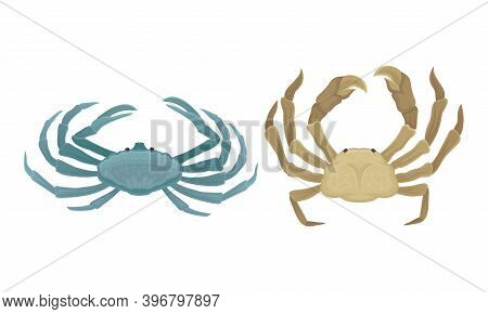Tropical Crabs As Decapod Crustaceans With Claws Vector Set
