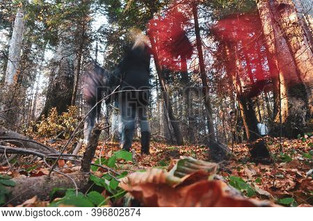 Long Exposure Time Image With People Walking Inside A Romanian Pine And Broadleaf Forest.
